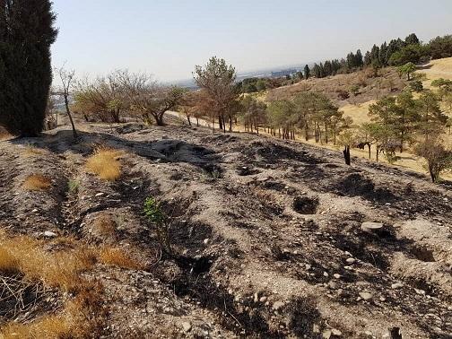 عضو شورای شهر: آتش سوزی بوستان چیتگر تهران عمدی بود