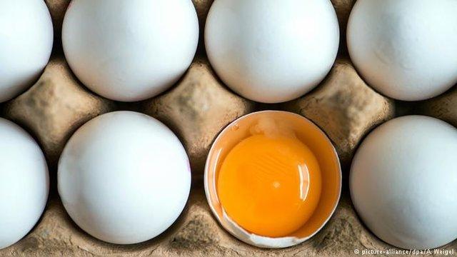 تخم مرغ بسته بندی شانه ای ٣١ هزار تومان|خبر فوری