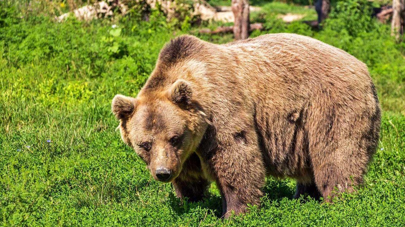 , کشف خرس ۴۰ هزار ساله/ عکس, رسا نشر - خبر روز