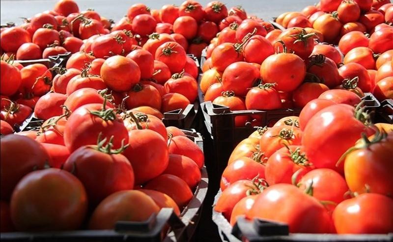 قیمت گوجه به ۴هزار تومان میرسد|خبر فوری