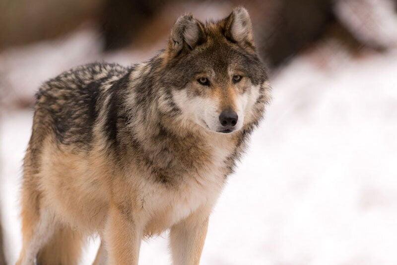 حیوانات وحشی, ۸ نکته برای نجات شما در مقابله با حیوانات وحشی, رسا نشر - خبر روز