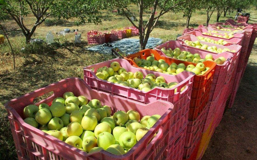 , سیب های درختی روی دست باغداران باد کرد, رسا نشر - خبر روز